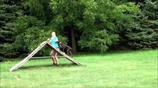 Cahill (german Shorthair Pointer) Dog Training Boot Camp Minneapolis