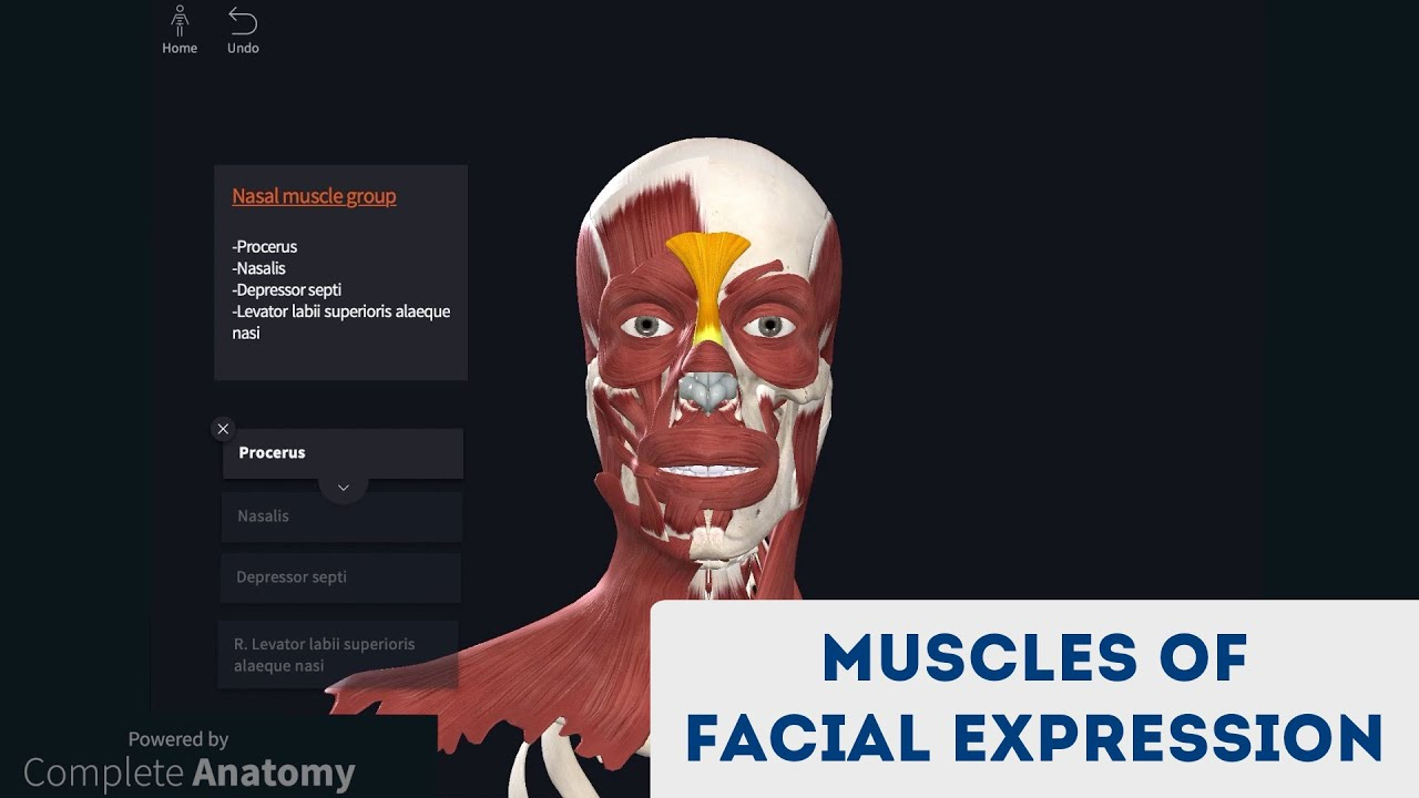 Muscles of Facial Expression (3D Anatomy Tutorial)