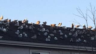 The Birds 2016