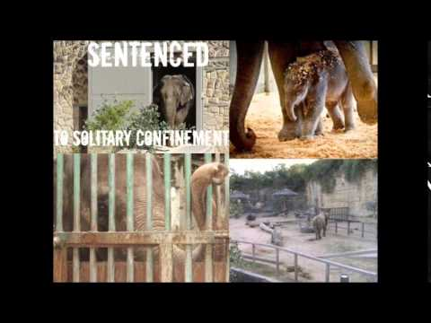 Persuasive Writing: Should Animals be Kept in Zoos?