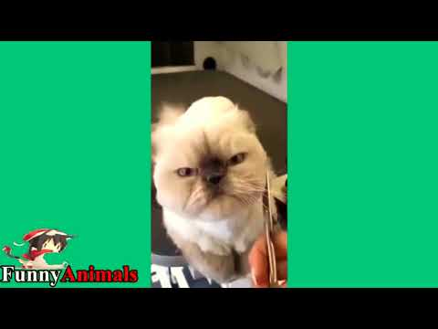 Funny Cat & Dog Vines compilation 2017  Cute 4