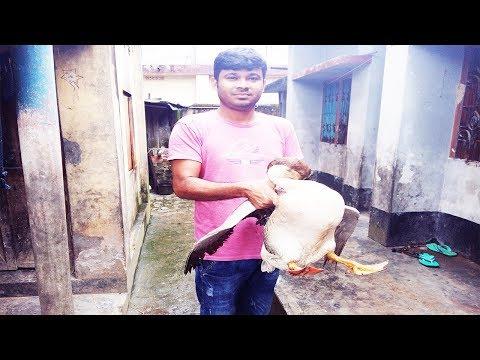 নারকেলের দুধে রাজহাঁস মাংস রান্না | Swan meat cooked in coconut milk Mp3