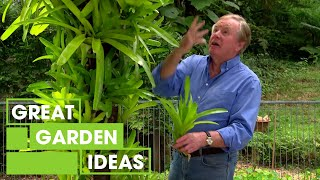 How To Make A Bromeliad Display | Gardening | Great Home Ideas