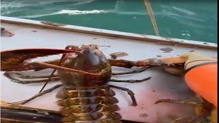 Талантливый рыбак ловит морских глубоководных существ EP46