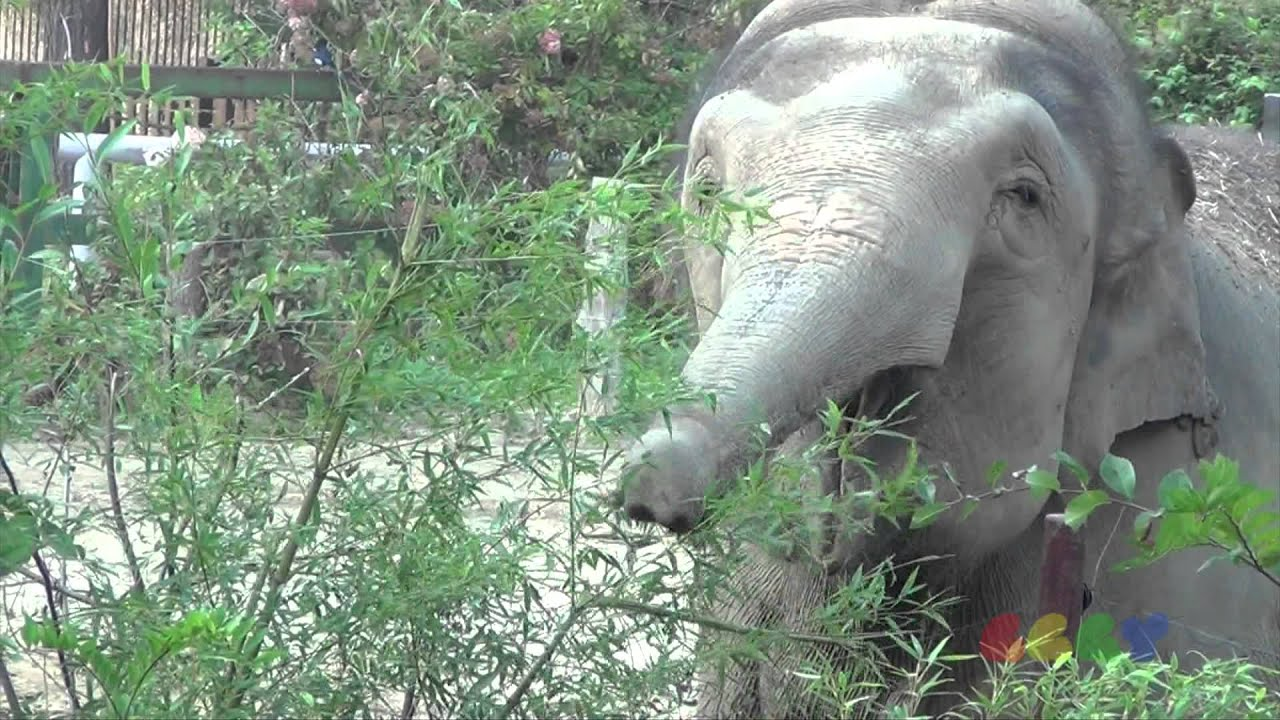 Elefant Seebär Und Co