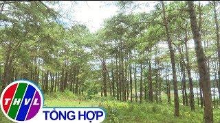 THVL   Phát hiện thêm một vụ đầu độc hơn 600 cây thông tại Đắk Nông