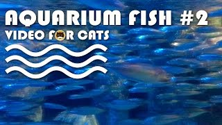 FISH VIDEO FOR CATS - Aquarium Fish #2. Entertainment Video for Cats to Watch.