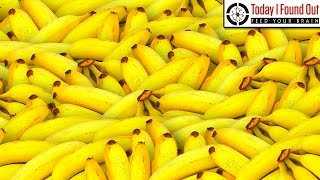 How to Easily Keep a Banana Perfectly Ripe For A Week