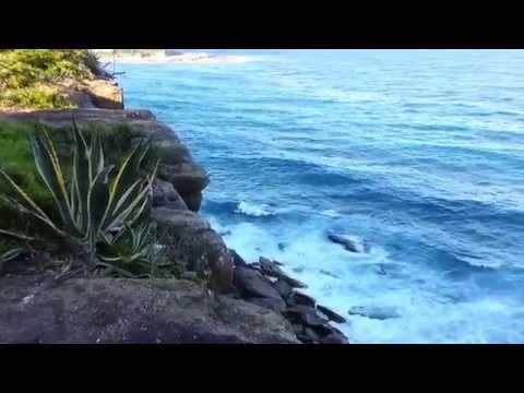 Australia - Sydney - Queenscliff - Agave Americana Var Marginata - Variegated Century Plant