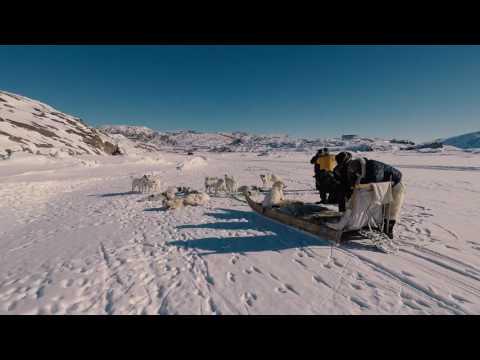 Job hos Albatros Arctic Circle, Kangerlussuaq