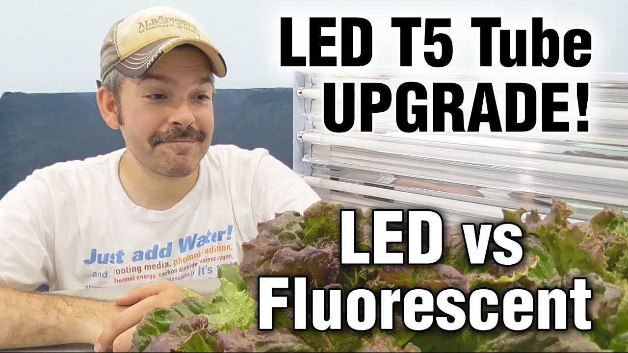 T5 Fluorescent Vs Thrive Agritech Transcend Led Grow Lights Hydroponic Lettuce Test