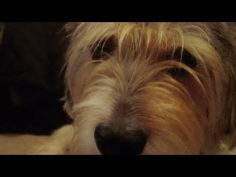 Funny dog music video featuring The Entertainer by Scott Joplin