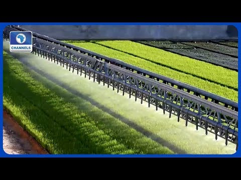 How Cross River Govt Is Transforming Rice Production In Nigeria