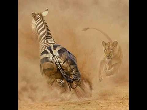 Awesome Africa's Wildlife Painting by Peter Stewart..
