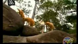 Bindi Irwin - Bindi the Jungle Girl clip - Dingo
