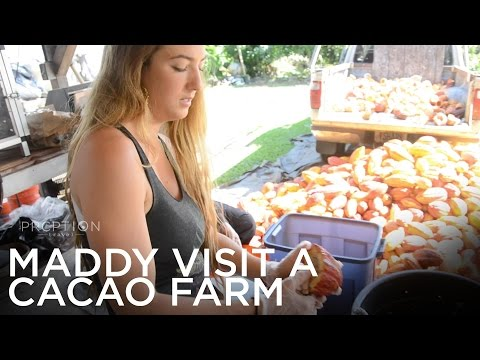 Maddy Visits Shark's Cacao Farm