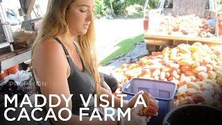 Maddy Visits Shark's Cacao Farm