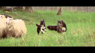 Husse promo video healthy lifestyle for dogs