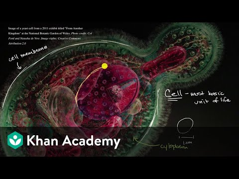 Introduction to the cell | Cells | High school biology | Khan Academy