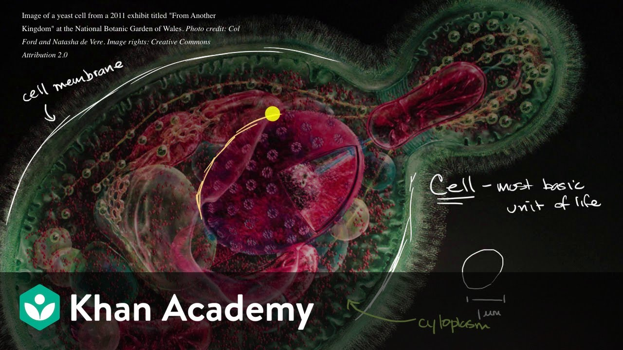 Introduction to the cell (video)   Cells   Khan Academy [ 720 x 1280 Pixel ]