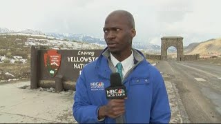 reporter leaves when herd of bison approaches