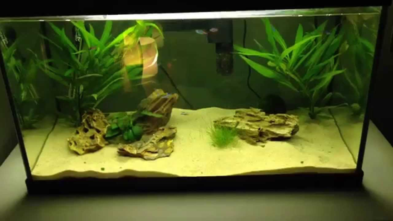 Decoration Aquarium 60 Litres 2013 Aga Aquascaping Contest 74  # Aquarium Meuble Tv