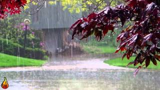 1 Hour Acoustic Guitar & Rain | Rain In The Streets | Relaxing Music, Rain Sounds ♫429