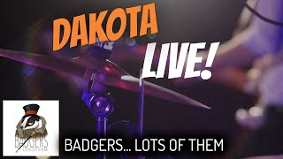 Dakota [Stereophonics] // Badgers... Lots Of Them // LIVE COVER