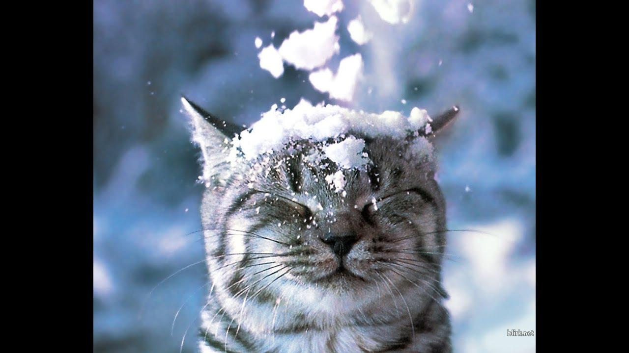 Мая, прикольные картинки вот и зима пришла