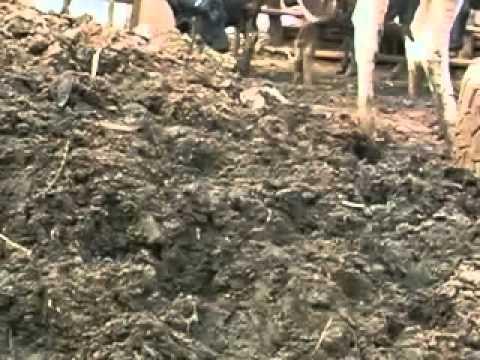 Soil fertility management in banana plantations