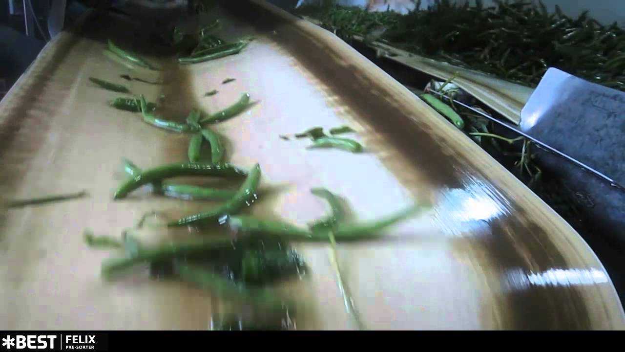 Grüne Bohnen Sortierer Felix TOMRA Sorting