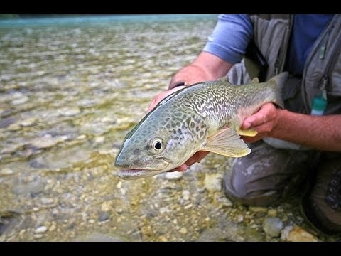 Slovenia fly fishing guides Paul Procter fishing for marble trout on Slovenian rivers. May fly