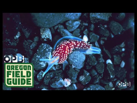 Creatures Of The Intertidal Zone: Up Close And Personal