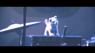 Schrödingers Katze - live teaser