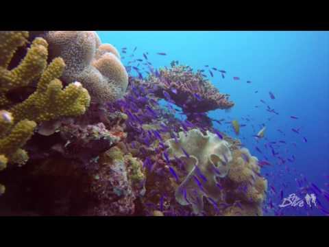ProDive Travel Fiji Safari