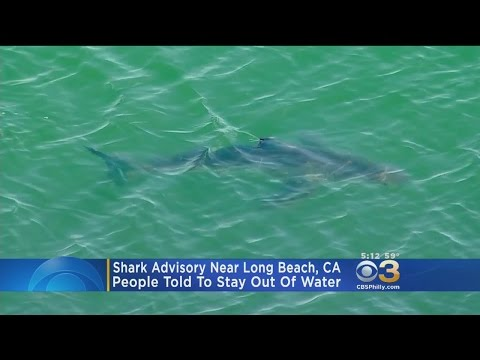 Swimmers Urged To Get Out Of Water After 15 Great White Sharks Spotted