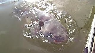 EASY Way To Find Catfish On A River