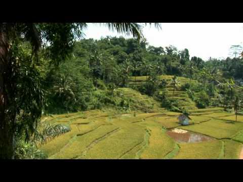 Rondreis Indonesië, Java en Bali