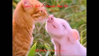 The Pigs - Papa