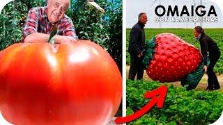 10 Frutas Y Vegetales Mas Grandes Del Mundo