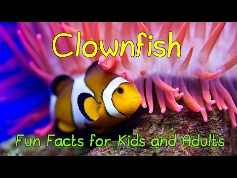 Amazing Facts About Clownfish - Fun Facts For Kids And Adults