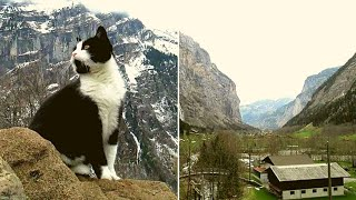 When A Hiker Got Stranded On a Mountain In The Swiss Alps, This Heroic Kitty Came To His Rescue