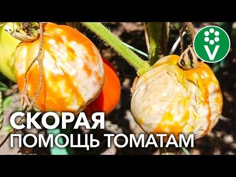 ВСЕ ЛЮБИТЕЛИ ТОМАТОВ ДОЛЖНЫ УВИДЕТЬ ЭТИ ФОТОГРАФИИ! Частые болезни томатов на фото подписчиков