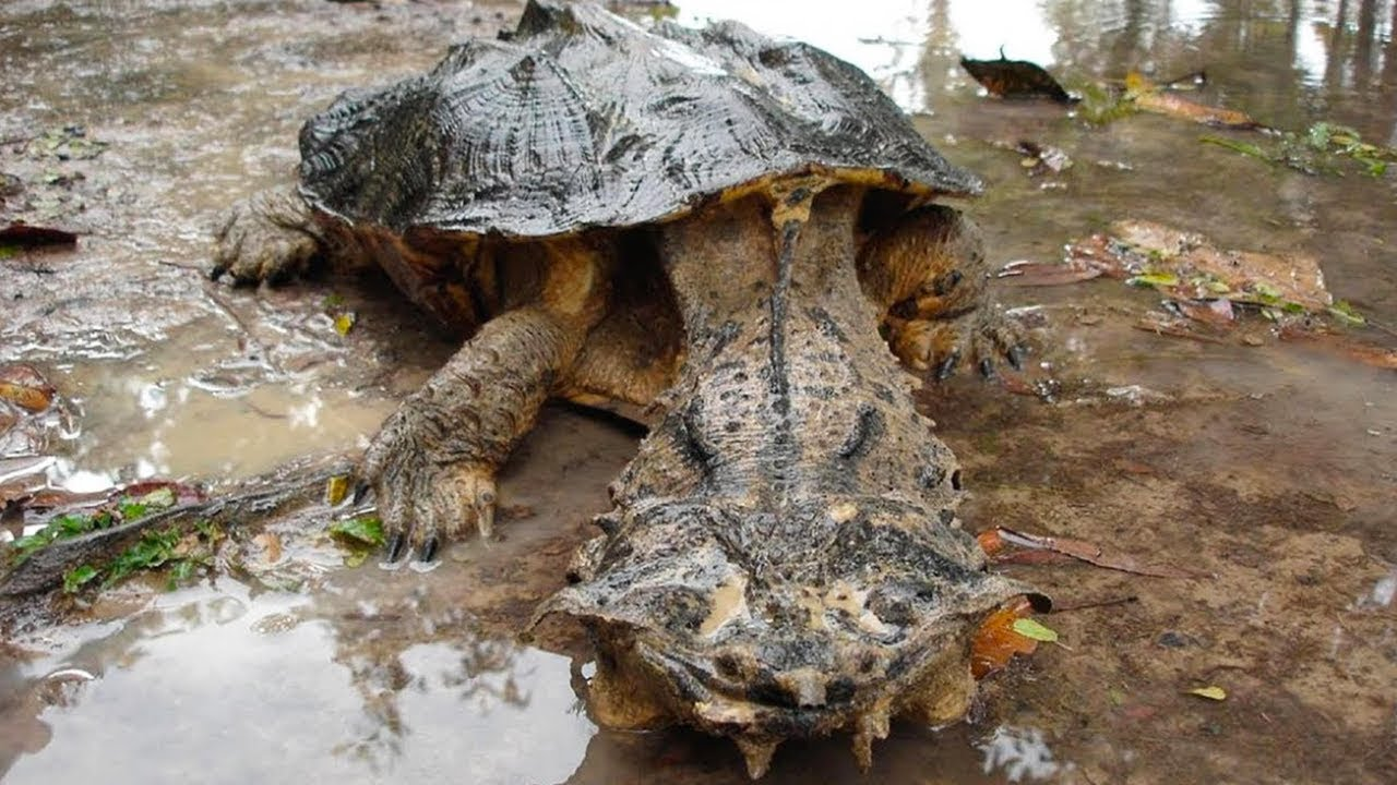 15 Most Dangerous Reptiles in the World