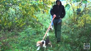 2012 Ukc Hunting Beagle World Championship
