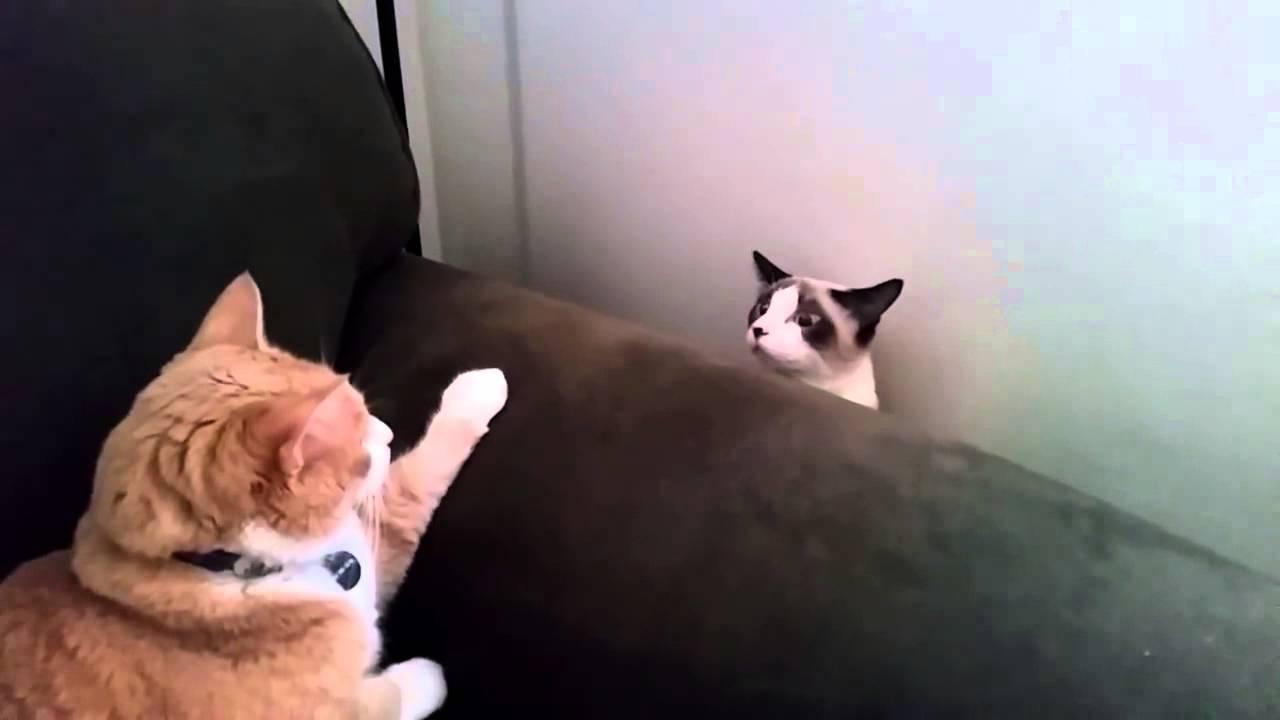 Kedi Maması Nasıl Saklanır