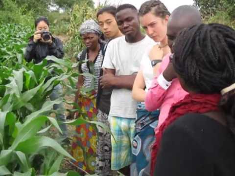 DIN Malawi Farming Systems