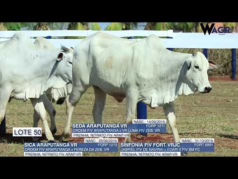 LOTE 50   FORP 1211,1213,6891