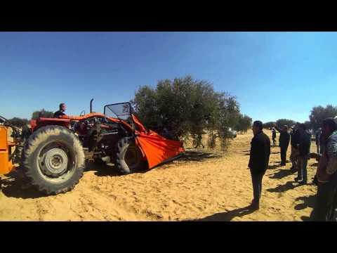 AGROMELCA. RÉCOLTE DES OLIVES EN TUNISIE - RECOLECCIÓN DE ACEITUNAS EN TUNEZ