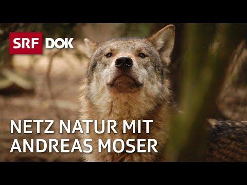 Wer ist der Wolf? Netz Natur vom 992010